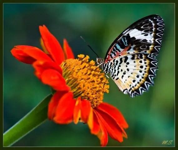imagenes de mariposas coloridas