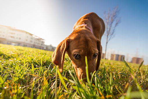 Image Result For What Is The Best Cleaner For Dog Urine In Carpet
