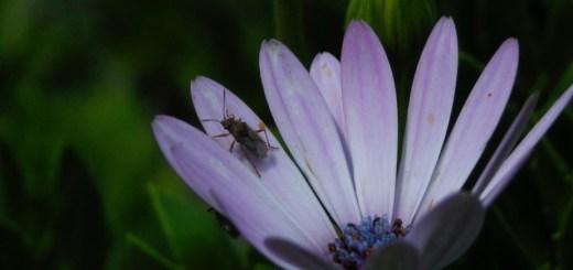 2008年8月。花と昆虫。