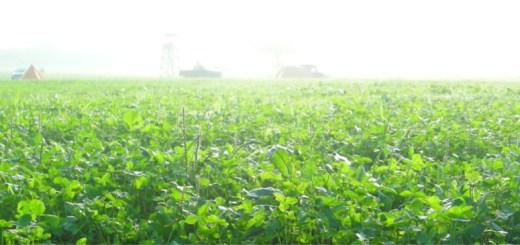 2008年9月。霧の草原にて。