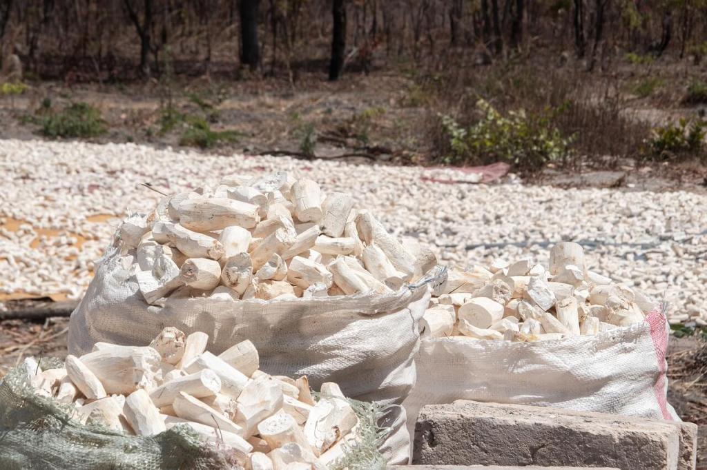 cassava processing - peeled cassava