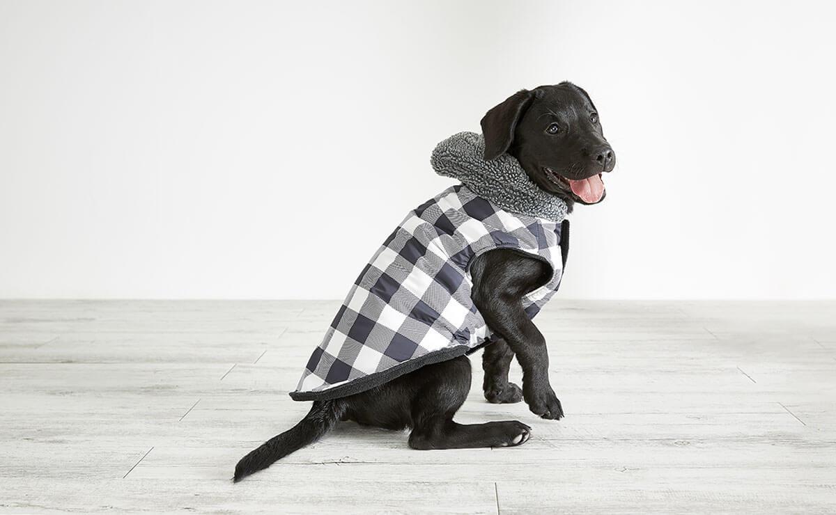 Dog Costumes Amp Dog Clothes Kmart
