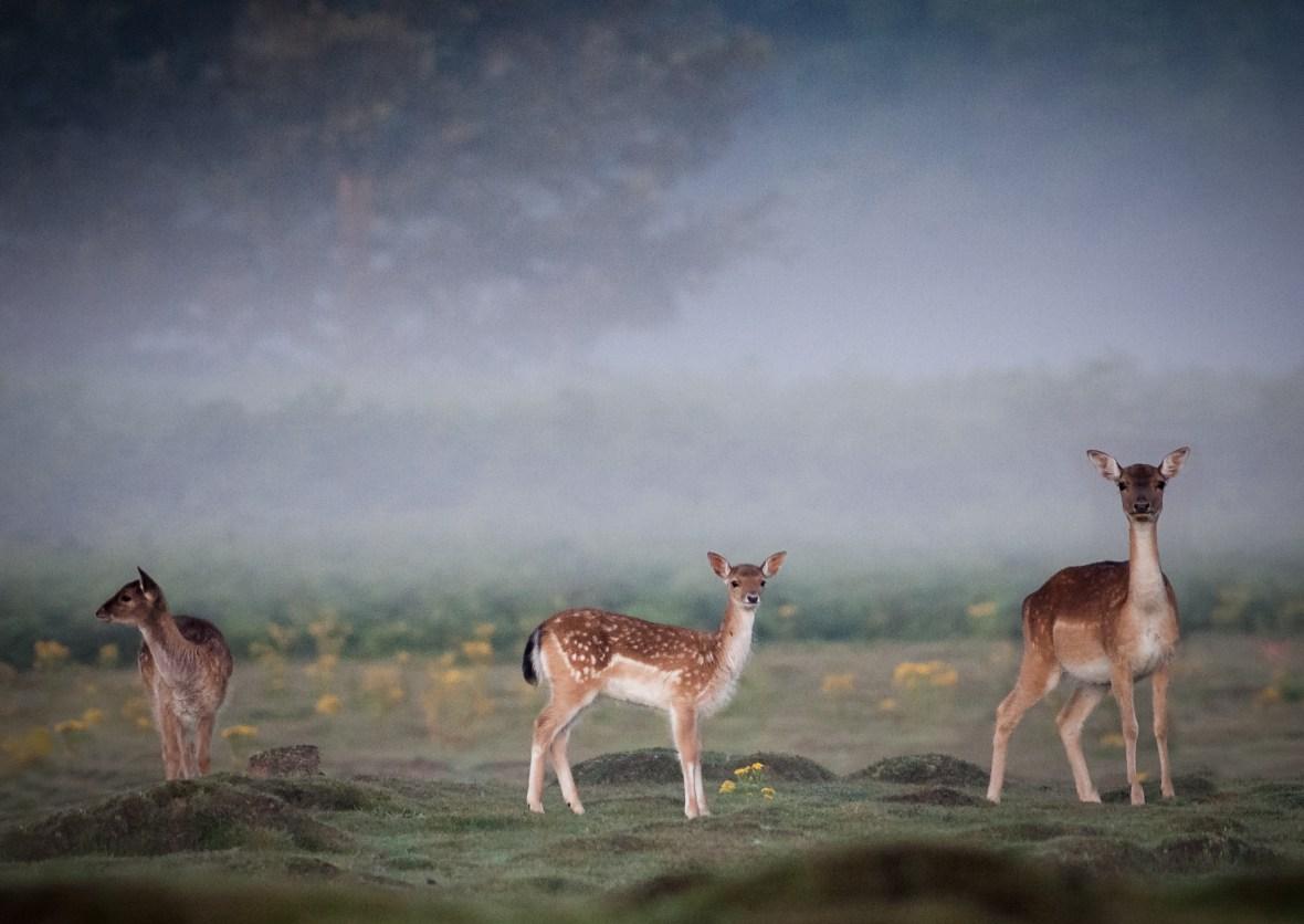 Three Deer's
