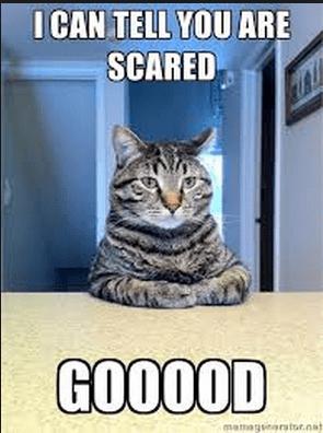 Scared Cat meme