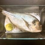 Nízkosacharidový recept: Pražma nebo jiná rybka pečená v soli