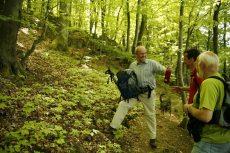 Wandern im Wald in Bad Endbach