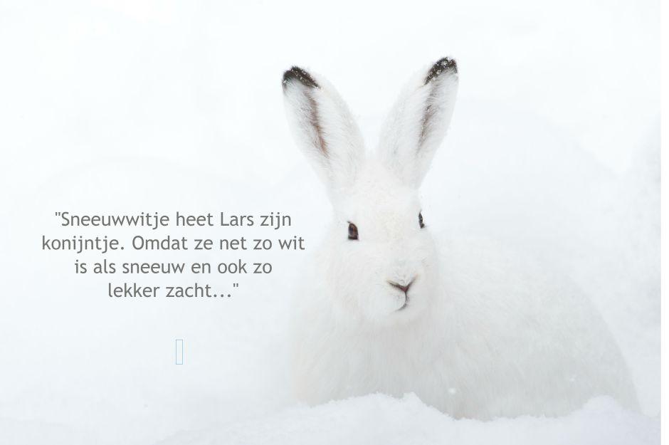 konijn wit sneeuw