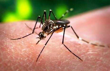 Amerika waarschuwt voor de Zika mug