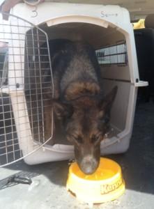 Een van de honden is 'klaar' met zijn werk | Janita Monna