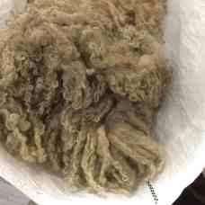 beauteous fleeces