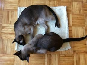 thinkandknitgreen cat exploration