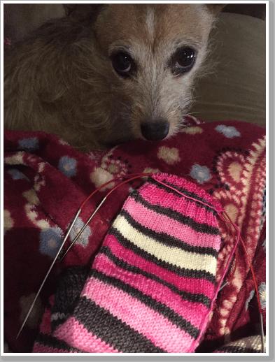 Pink Sock 3
