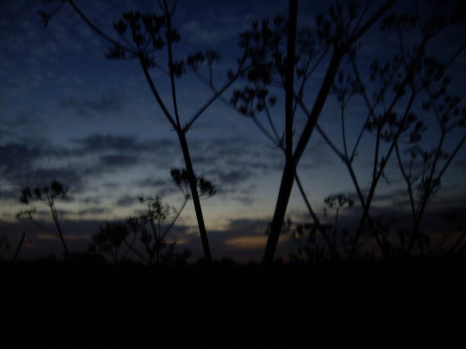 nightwalk_FelicityFord