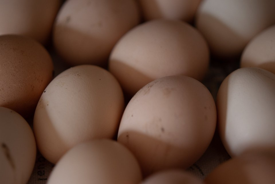 Amazing eggs laid by the chickens