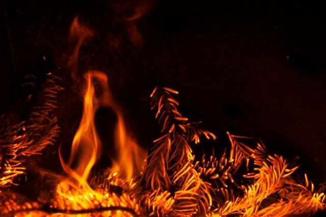 a closeup photograph of burning - flaming - pines.