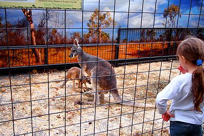 11nysswf_kangaroo_large