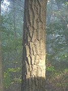 elk-creek