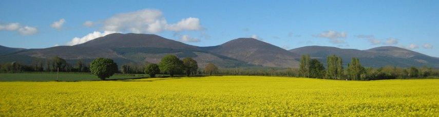 Tipperary Knockmealdown Mountains Rapeseed photo