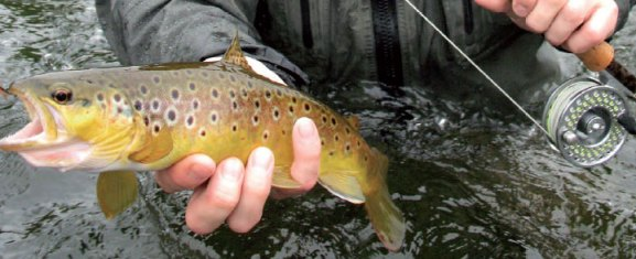 Fishing Permits and Contacts for the Suir