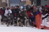 Under light snow, a large crowd greets Martin Buser on his arrival for Iditarod 42