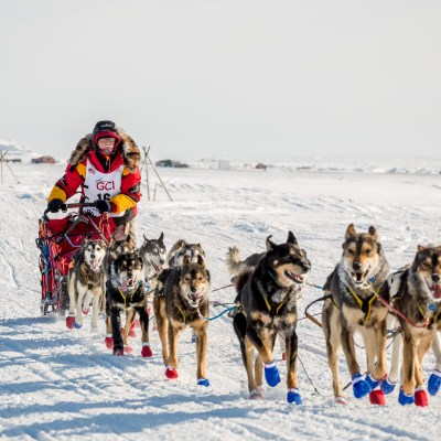 Iditarod musher Mitch Seavey and his sled dogs, mushing on a snowy tundra landscape.