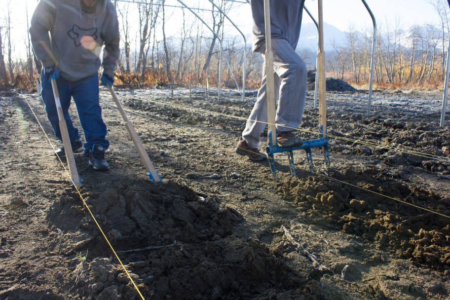 Aerating the soil in preparation for Pilgrim Produce's first winter crop.