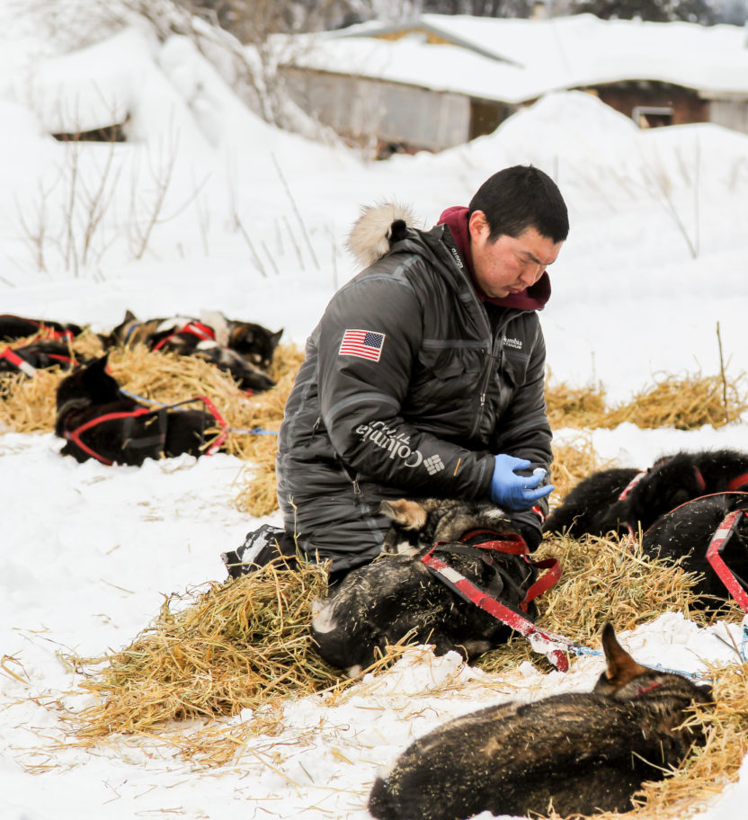 Iditarod musher kneels in front of his sled dog team, tending to them.