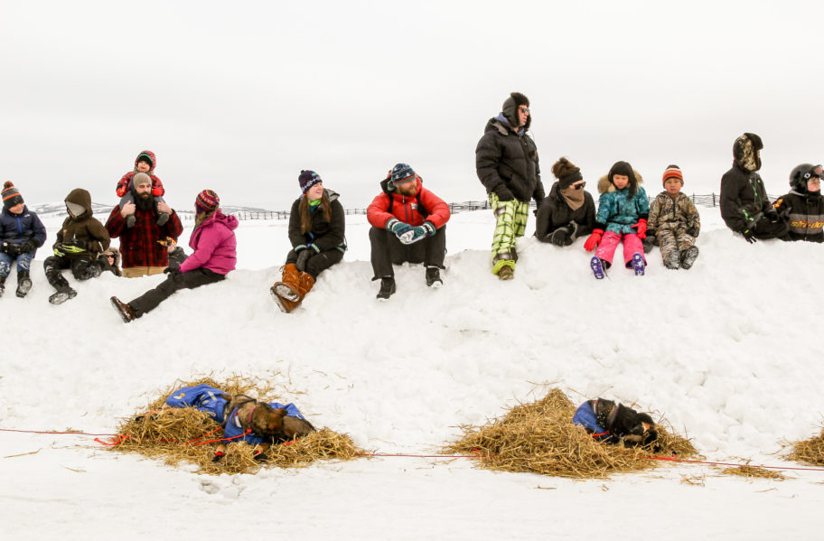 On a snowy embankment, Unalakleet crowd watches Nic Petit attend to his sled dogs