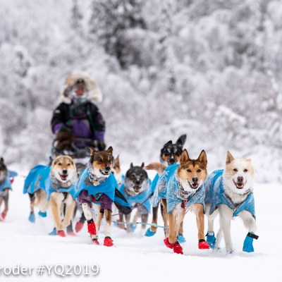Sled dog team mushes along a snowy, forest trail during the daytime.