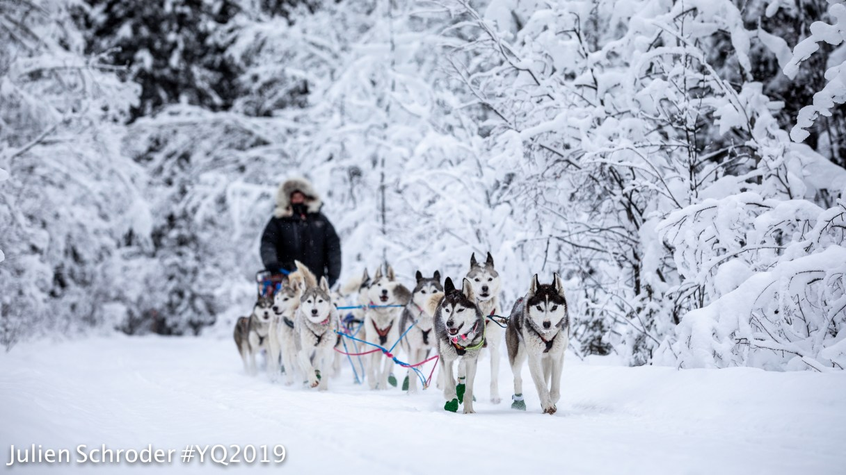 Sled dog team mushes along a snowy forest trail