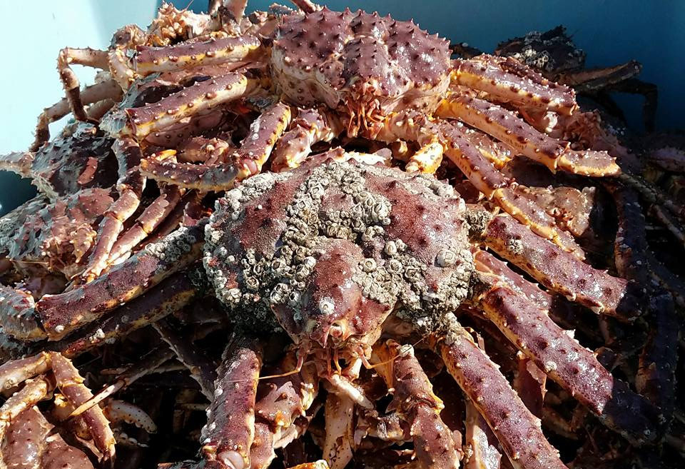 Red crabs piled on top of one another.