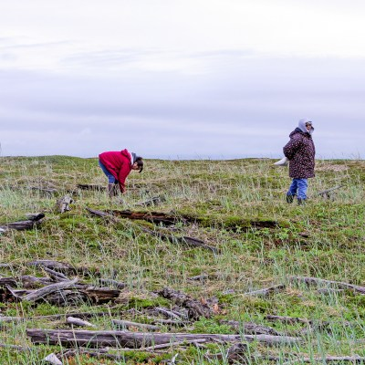 Two women pick berries on the tundra