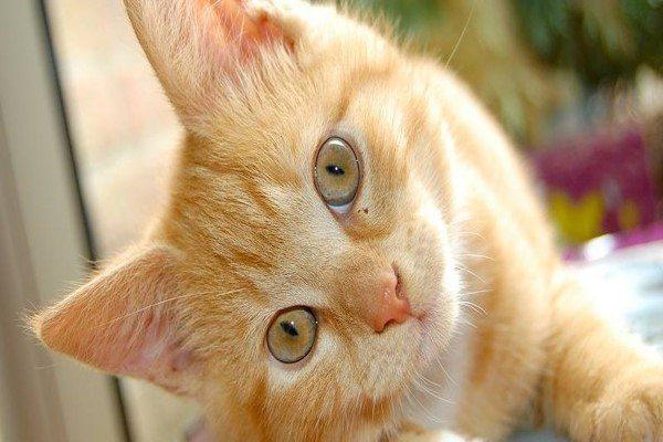 رؤية القطط في المنام للعزباء تفسير ابن سيرين كنوزي