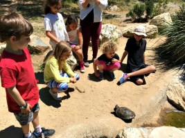 Community Newsletter-Week #30: Acorns (ages 5-7)