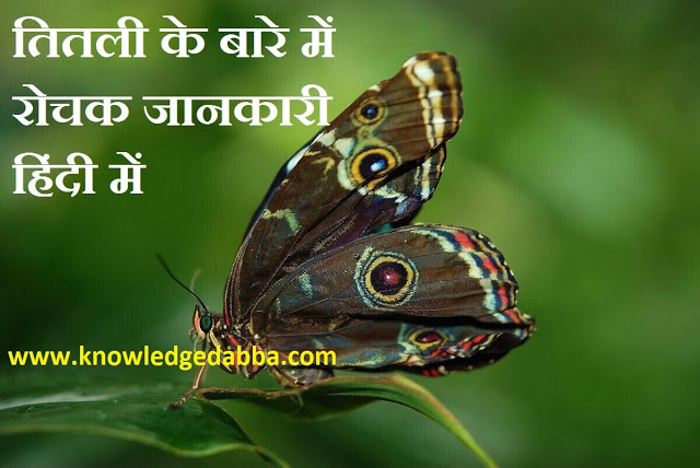 about butterfly in hindi