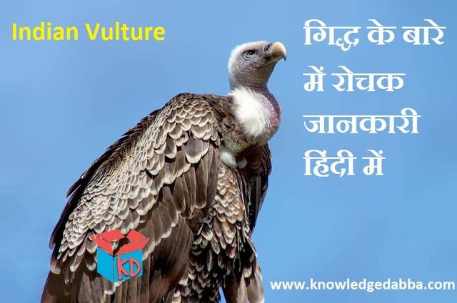 Indian Vulture In Hindi