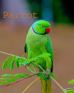 parrot in hindi