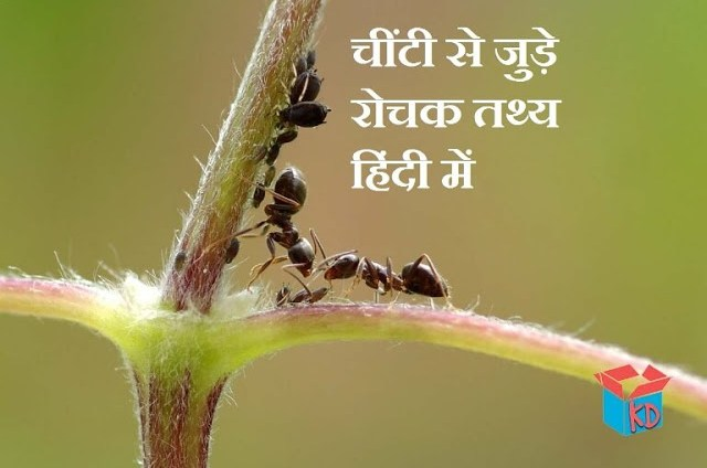 About Ant In Hindi
