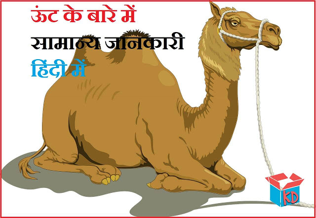 Camel Information In Hindi