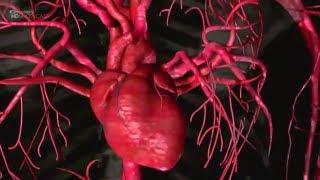 Human Anatomy and Medicine - Documentary
