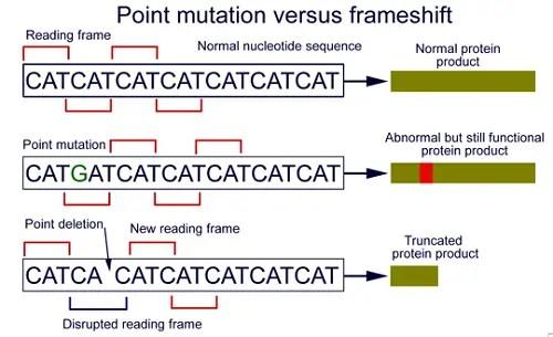 Frameshift Mutation Vs Point | Frameswall.co