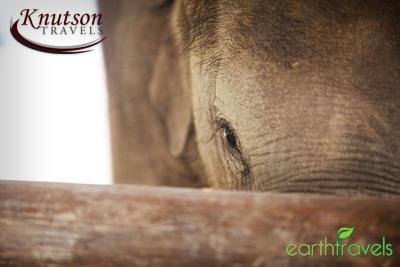 Elephant Peek