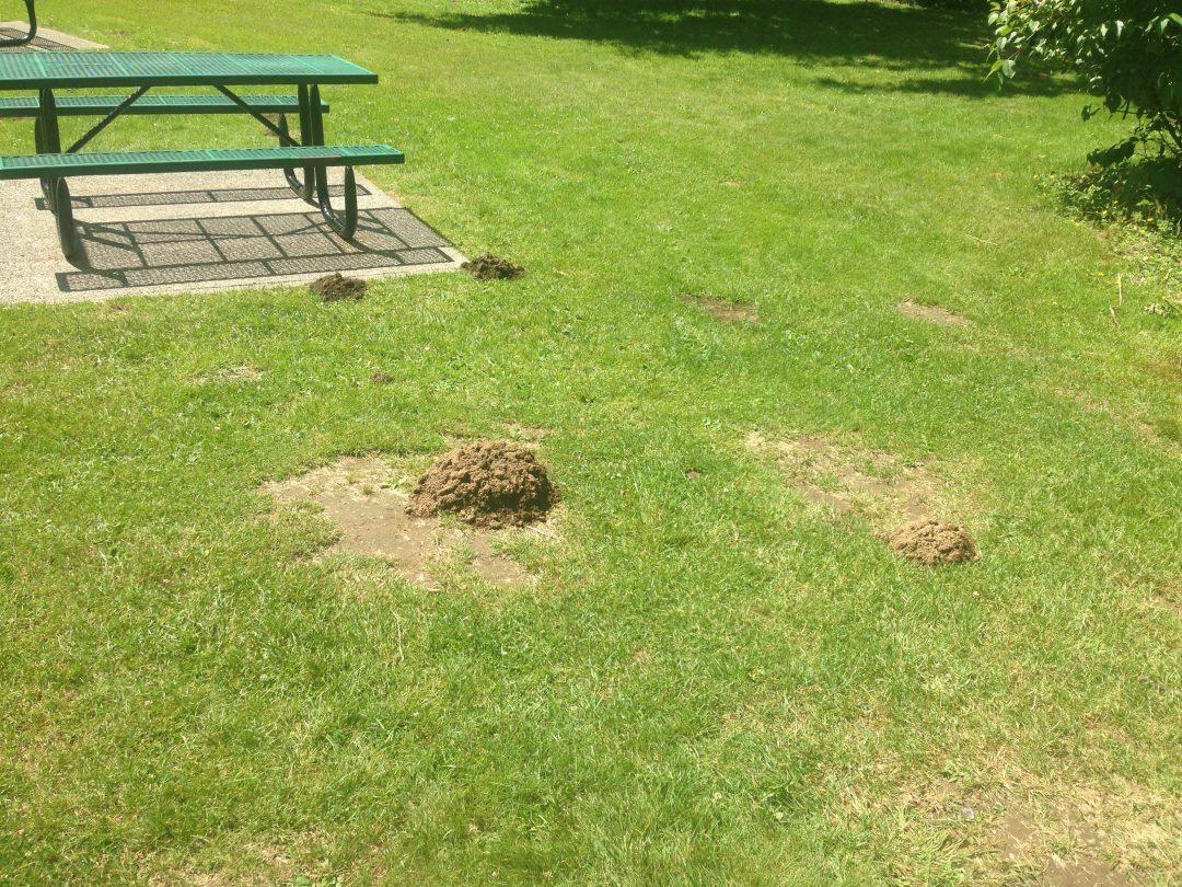 huge mole mound