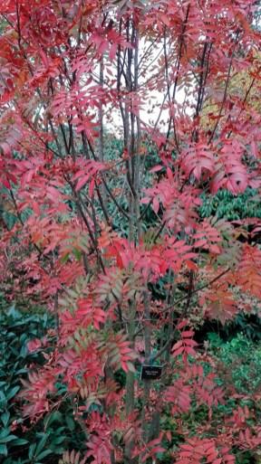 Arboretum-herfst-03