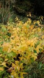 Arboretum-herfst-08