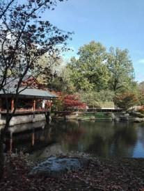 Hasselt-Japanse tuin-005