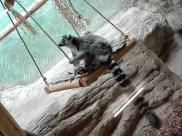 Antwerpen-dierentuin-003