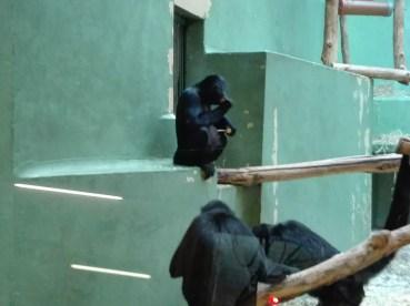 Antwerpen-dierentuin-004