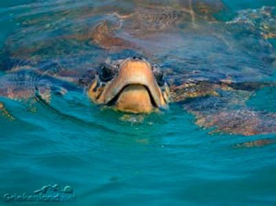 Schildpadden-003