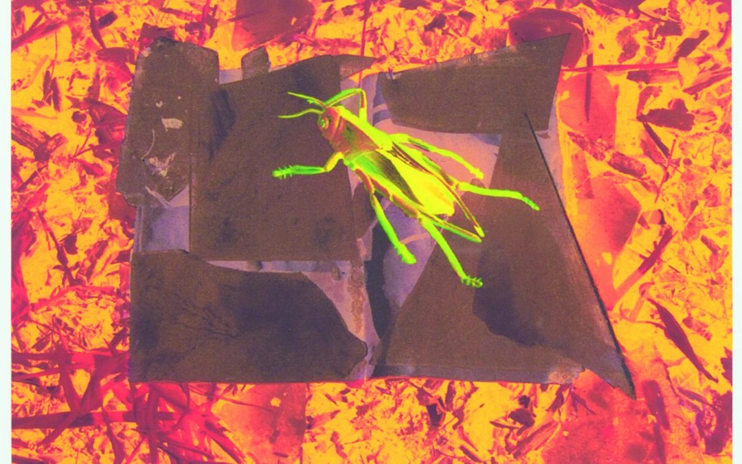 "Alexandra Haeseker RCA  ""Burning Sappho's Books / Drought"" #7/15   2003"